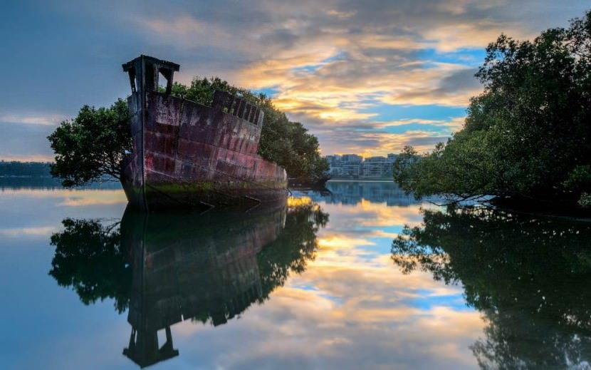 102 year old floating forrest in Sydney, Australia