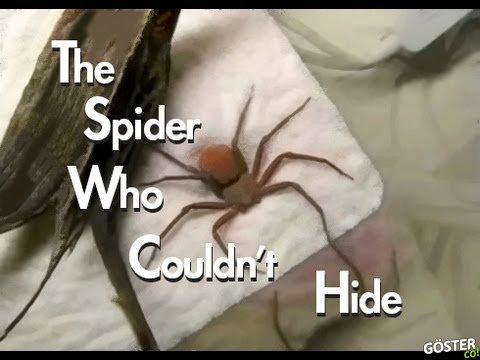 Kendinden Saklanmaya Çalışan Aptal Örümcek