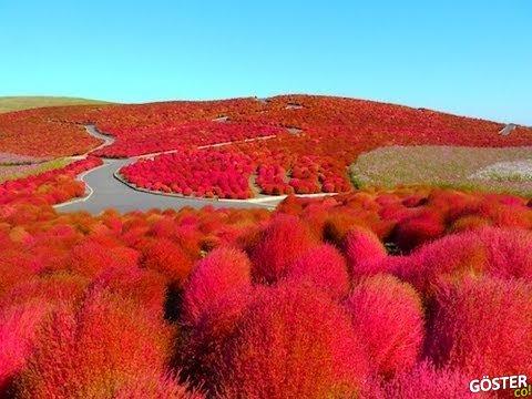 Yaprakların Renklerine Aşık Olacaksınız – Japonya'da Sonbahar