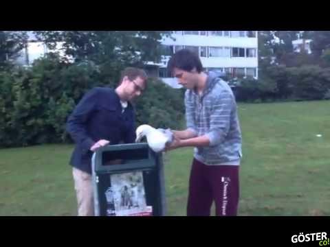 Ayağı Çöp Kutusuna Sıkışan Martıyı Kurtaran İyi Kalpli İnsanlar