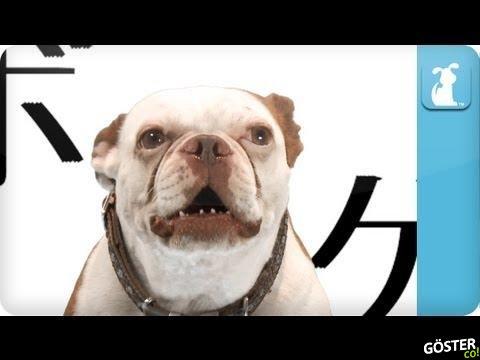 Game of Thrones Tema Müziğini Köpek Söylerse