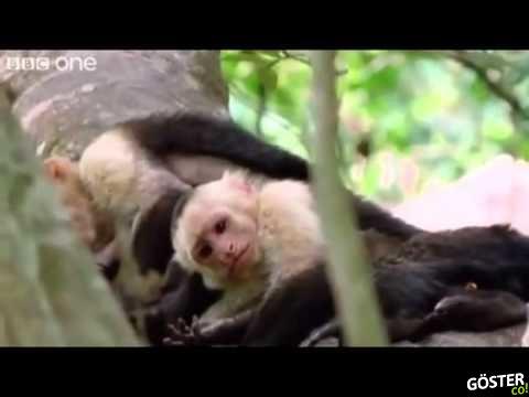 BBC'nin Hayvan Seslerine İnsan Sesiyle Dublaj Yapılması