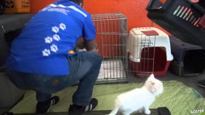 Doğumu Yaklaşınca Sağlık Ocağının Kapısına Dayanan Kedi