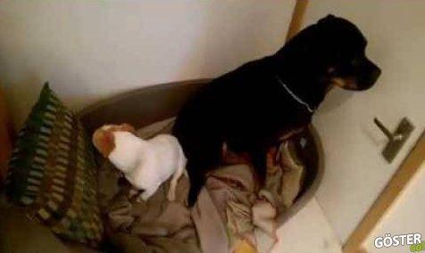 Köpek Maması Çaldığı için Utanıp Yüz Çeviren Köpekler