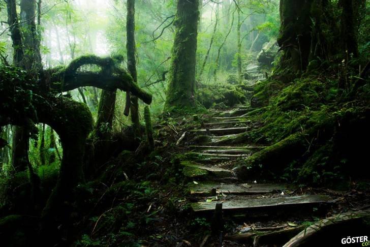 amazing-paths-24