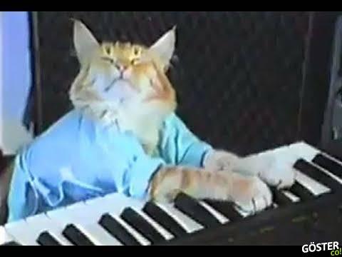 """İnternet Fenomeni """"Piyano Çalan Kedi"""" 9 Yaşında Hayatını Kaybetti"""