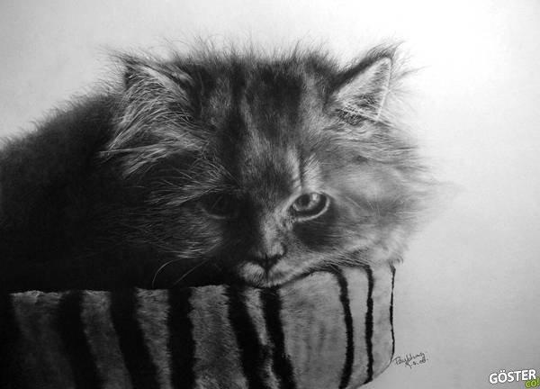 Fotoğraf Olduğuna İddiaya Girebileceğiniz 17 Gerçekçi Kedi Çizimi