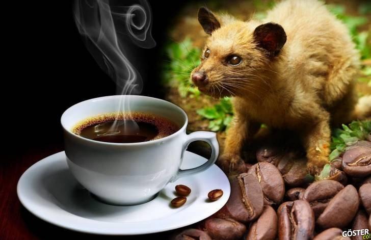 """Dünyanın En Pahalı Kahvesi """"Kopi Luwak"""" Hakkında Tüm Bilmeniz Gerekenler"""