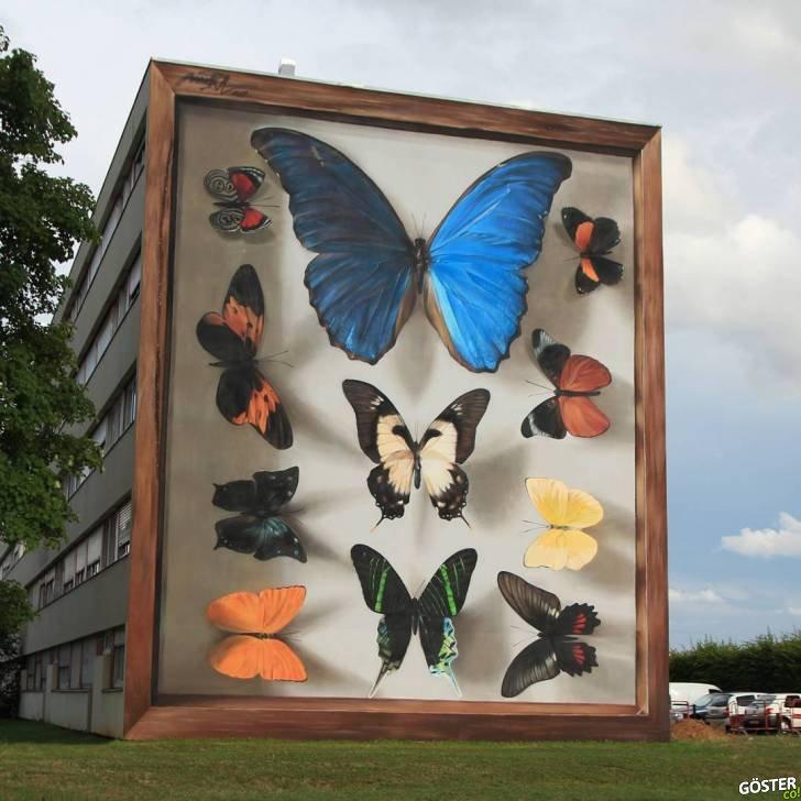 20 kelebek numune kutusu ve onlarca kelebek dev duvarlara resmedildi