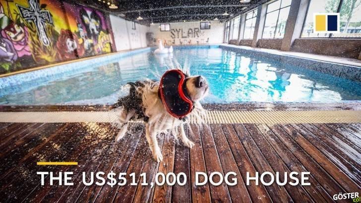 511.000 Dolar Harcayarak Köpeğine Özel Konak Yaptıran Adam