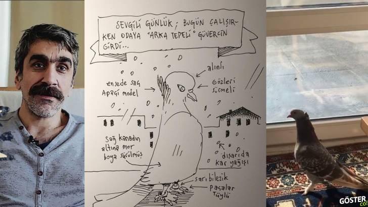 Karikatürist Emrah Ablak'ın Evine Güvercin Girdi, Sanatçı Güvercin Üzerinden 7 Çizimlik Harika Bir Seri Çıkardı