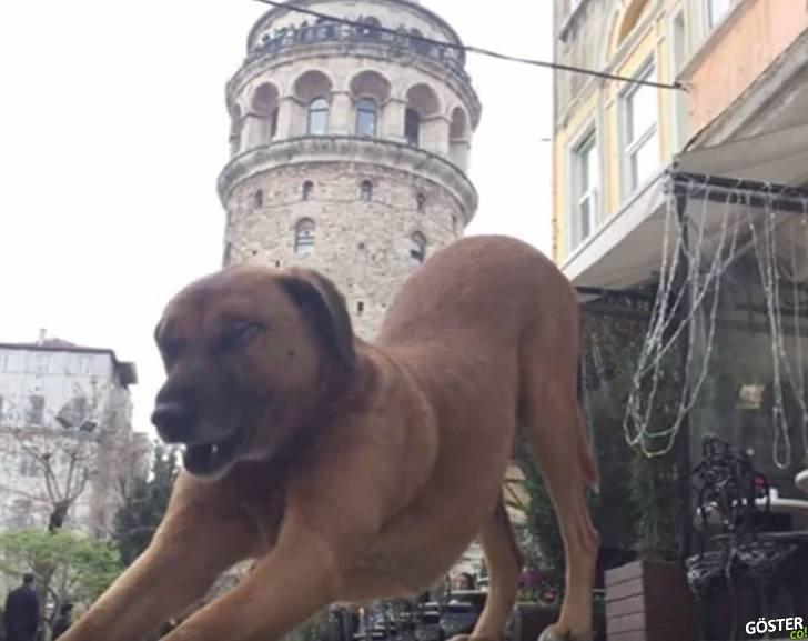 İstanbul'un Sokak Sakinleri Yardım Bekliyor