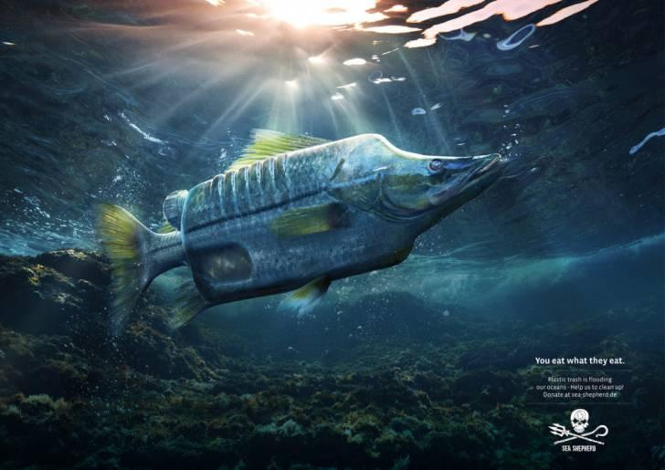 Best Creative Ad - Sea Shepard