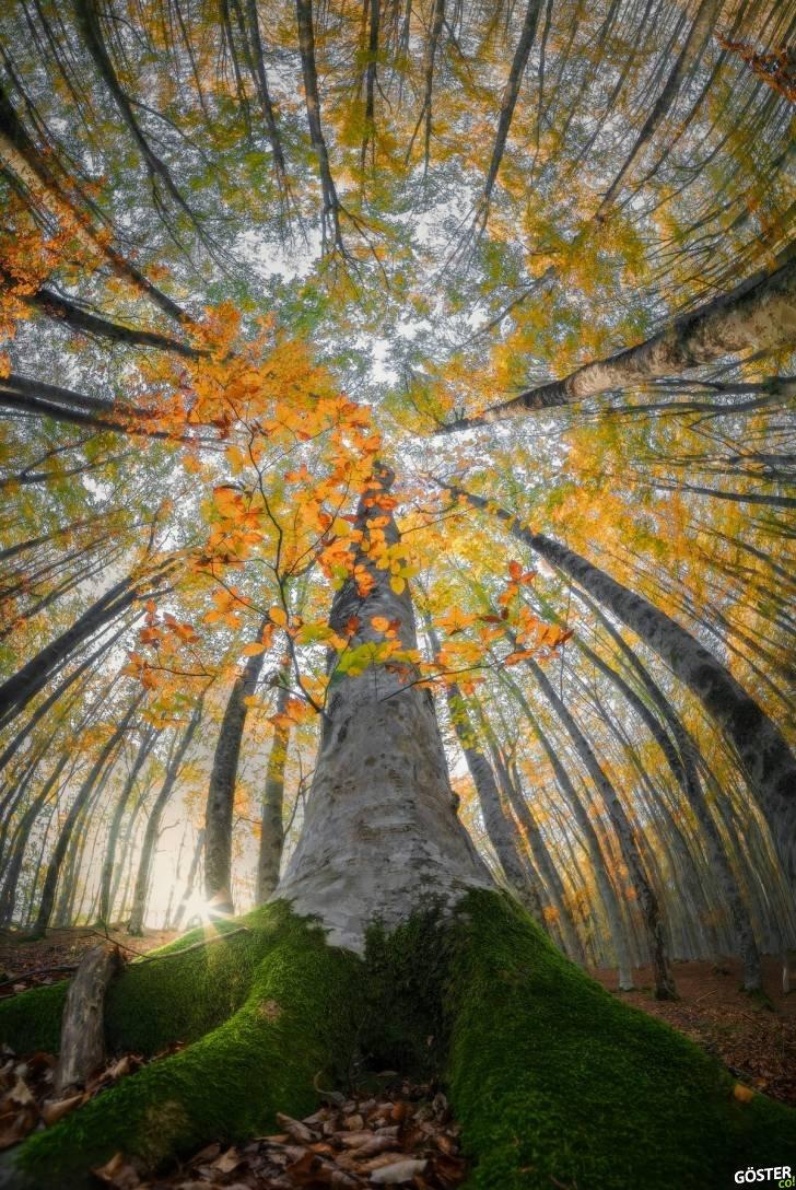 İtalyan fotoğrafçı, ormanların güzelliğini, ormanın orta yerinde yukarı bakarak fotoğraflamış