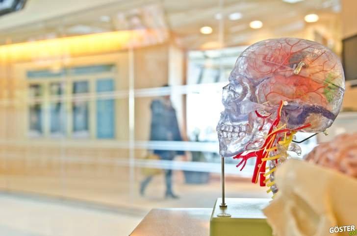 Bağırsak florasının belleği nasıl etkilediğine dair yeni moleküler bilgiler