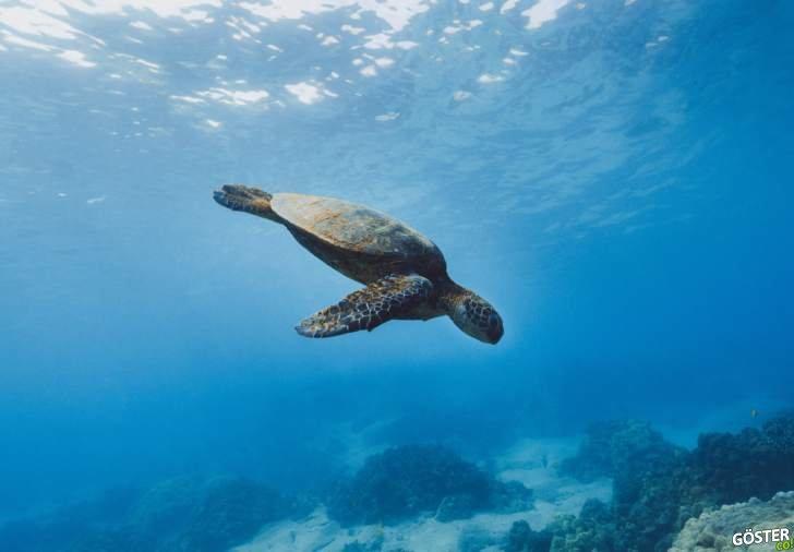 Türünü kurtaran 800 yavru sahibi 100 yaşındaki kaplumbağa Diego emekliye ayrıldı