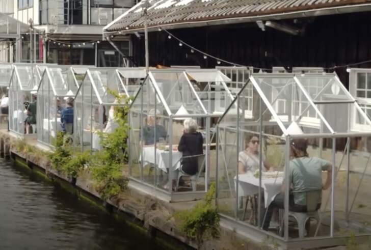 Amsterdam restoranlarında yeni Corona virüs konsepti: Serada yemek