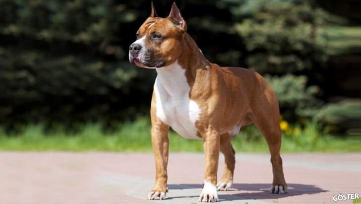 Terrier cinsi köpeğin annesine saldırmasıyla duvara ateş edip köpeği kaçıran adam