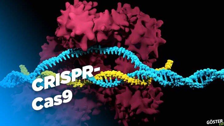 Bu yıl Nobel Ödülü'ne layık görülen çığır açıcı CRISPR-Cas9 tam olarak nedir?
