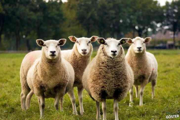 Hayvanlar, tabaktaki et haline gelene kadar yaşananlar